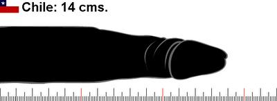Tamaño promedio del pene en Chile